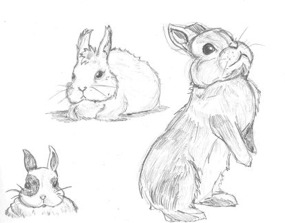 My most recent bunny sketch.