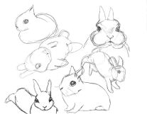 Me trying to draw more buns