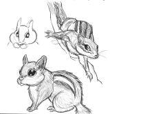 2014 chipmunk pen drawing